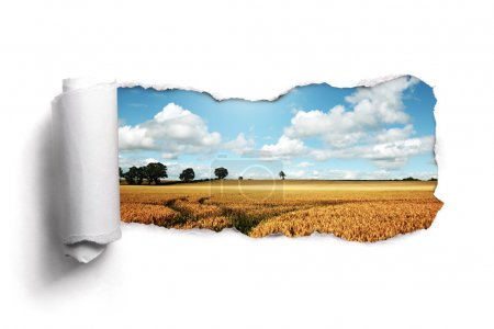 Photo for Tearing a paper frame hole to reveal wheat field landscape - Royalty Free Image