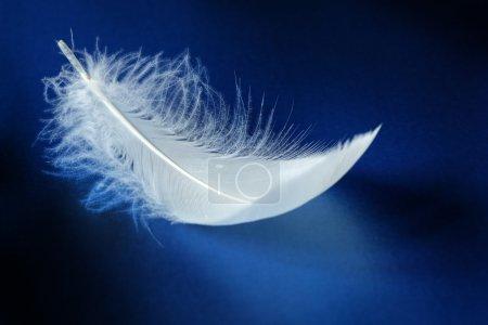 Photo pour Plume blanche sur fond bleu - image libre de droit