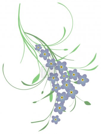 Illustration for A twig with forget me not flowers - Royalty Free Image