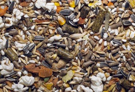Photo pour Mélange de nourriture de grains pour pigeons hamsters et les lapins - image libre de droit
