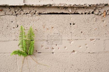 Photo pour Une fougère poussant sur un mur de blocs de ciment. Composé pour inclure l'espace de copie . - image libre de droit