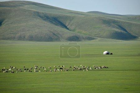 "Inner Mongolia Hulunbeier ""China's first Qushui"" mergel River, Golden Horde Khan Mongolian steppe tribes sheep, horses, cattle"