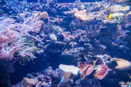 Hong Kong Ocean Park Ocean Wonders Aquarium of marine organisms