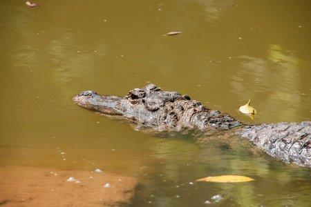 Chongqing crocodile crocodile pool center