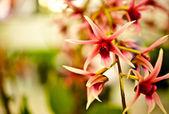 Květina orchidej