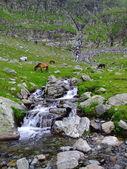 Divocí koně v horách 2