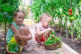 Roztomilé holčičky shromažďovat plodinu okurek ve skleníku