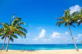 Palm trees on the sandy beach in Hawaii