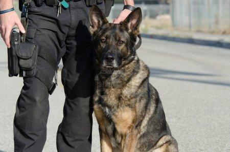 Photo pour Un chien policier assis à côté de son maître . - image libre de droit
