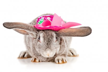 Gray rabbit in a pink hat