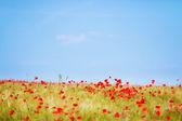 Fresh flower field