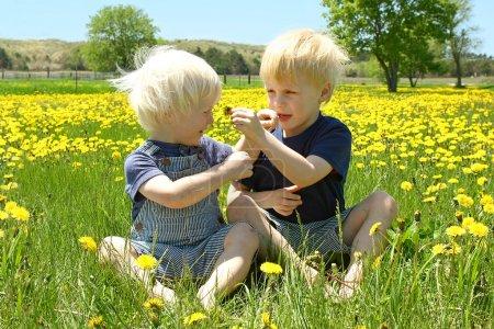 Photo pour Deux jeunes enfants, un petit garçon et son petit frère sont assis à l'extérieur sur une prairie de fleurs de pissenlit, aidant les autres à sentir les fleurs. - image libre de droit