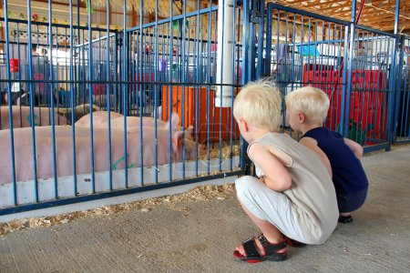 Young Children Looking at Pigs at County Fair