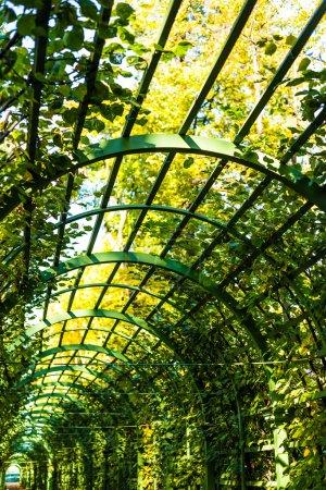 Arch in garden