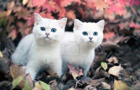 autumn & kittens
