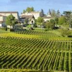 Vineyards of Saint Emilion, Bordeaux Vineyards...