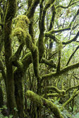 Rain Forest Garajonay