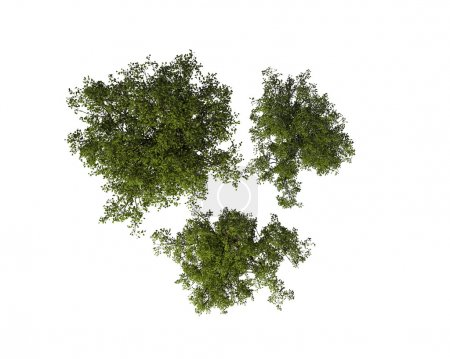Photo for Set of Tree, View from the Above, Isolated on White Background - Royalty Free Image