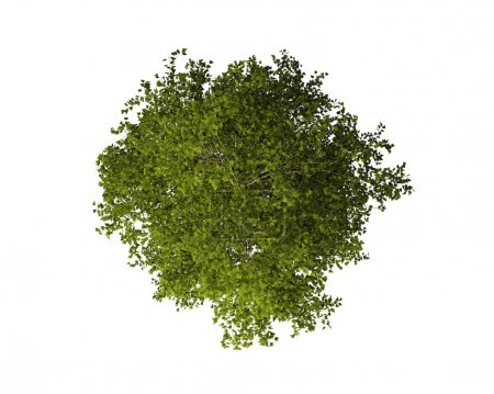 Tree from Above Isolated on White Background