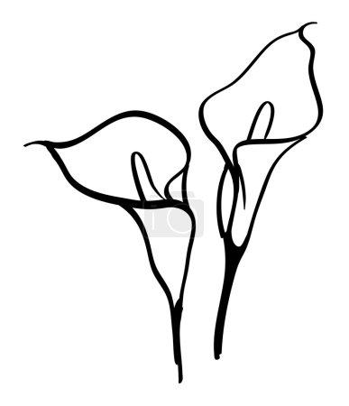 Black silhouettes of calla lilies. Vector illustra...