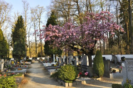 Small cemetery in spring...