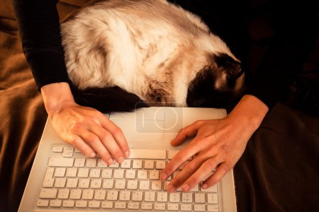 Cat sleeping on woman's lap while she works on laptop