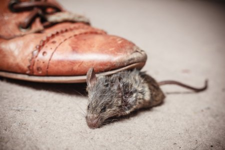 Foot kicking dead mouse