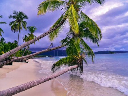 Palm trees over the white sand beach