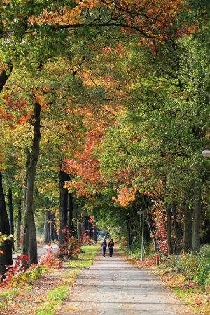 Photo pour De longues promenades pendant les mois d'automne - image libre de droit