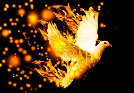 Photo pour Colombe volante sur le feu, sur fond noir - image libre de droit