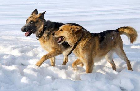 Dogs friendship