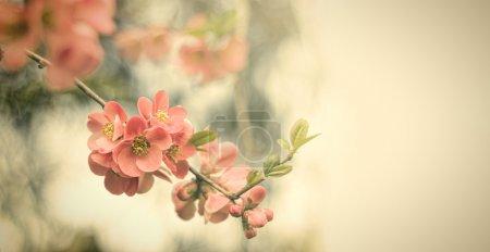 Photo pour Fleurs anciennes. Photo de style antique de fleurs d'arbre avec un vieux motif de papier grunge - image libre de droit