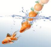 Mandarin éclabousser dans l'eau et la transformer en un poisson d'or