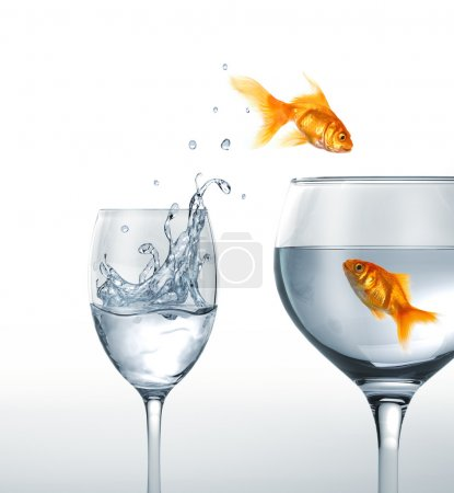 Gold fish smiling jumping from a glass of water, to a larger one