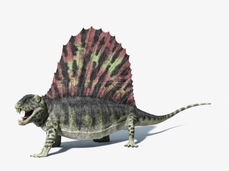 Dimetrodon dinosaur. On white background with dropped shadow