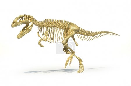 Gigantosaurus dinosaurus full photo-realistic skeleton, scientifically correct.