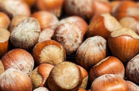 Hazelnuts background macro.