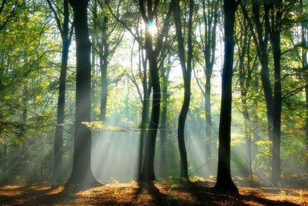 Photo pour Verser dans une forêt d'automne un peu floue créant une ambiance mystique de rayons de soleil - image libre de droit