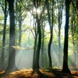 Sunbeams pouring into a slightly blurred autumn fo...