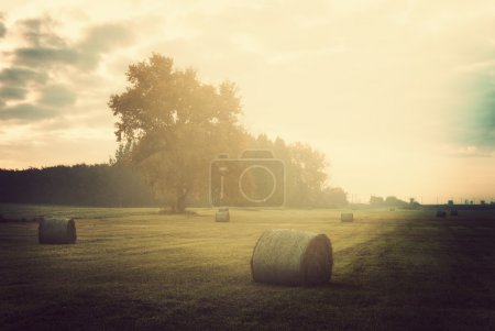 Bales on the meadow...