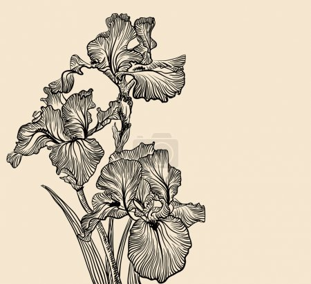 Vector decorative designs of iris flowers