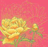 Vector decorative image peony flowers