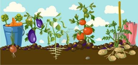 Illustration for Stylized vegetables set in a garden with tools isolated - Royalty Free Image