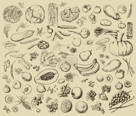Illustration pour Illustration vectorielle d'un ensemble de légumes, fruits, épices, herbes peints à la main - image libre de droit