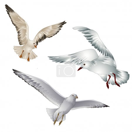 Illustration for Vector illustration of birds gull on white background - Royalty Free Image