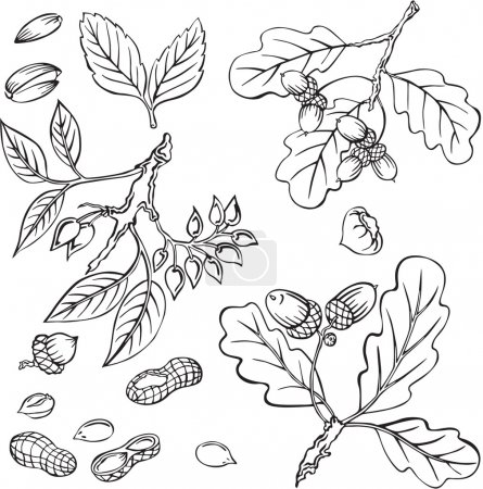 Vector illustration of silhouettes of various nuts