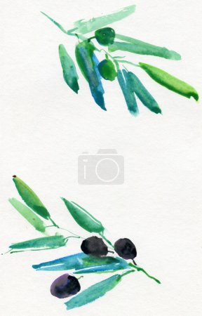 Photo for Olives Watercolor - Royalty Free Image
