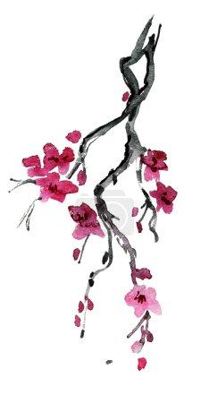 Photo pour Fleurs de cerisier de printemps. aquarelle peinture . - image libre de droit