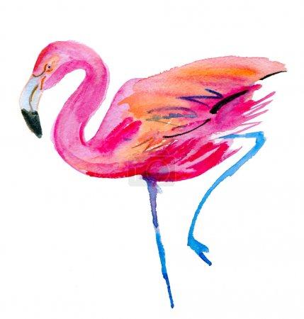Flamingo watercolor sketch