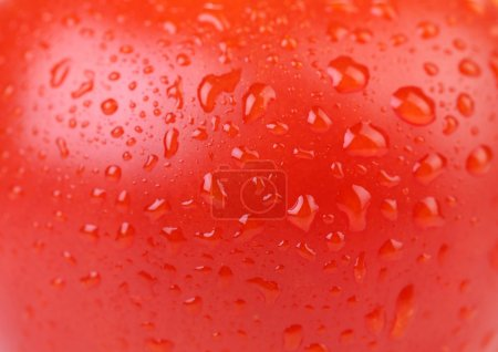 Water drops on red tomato. Close up.